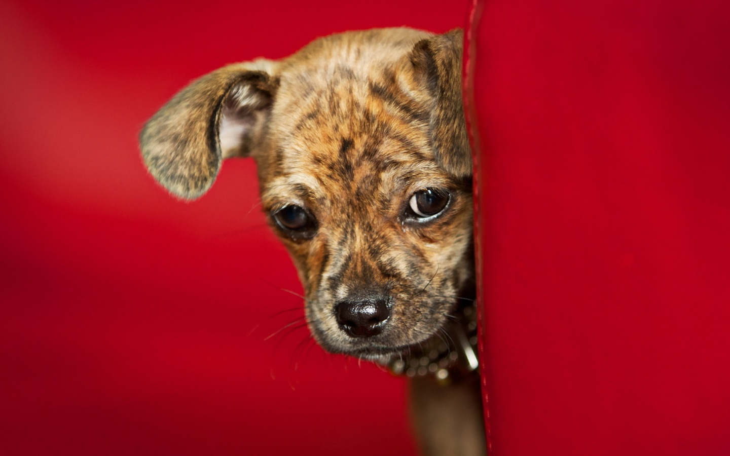 Dog View Red Background
