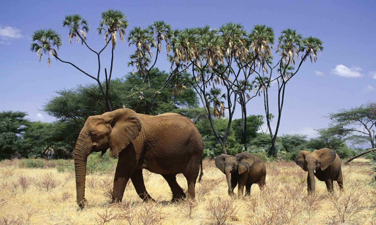 Elephants And Cubs