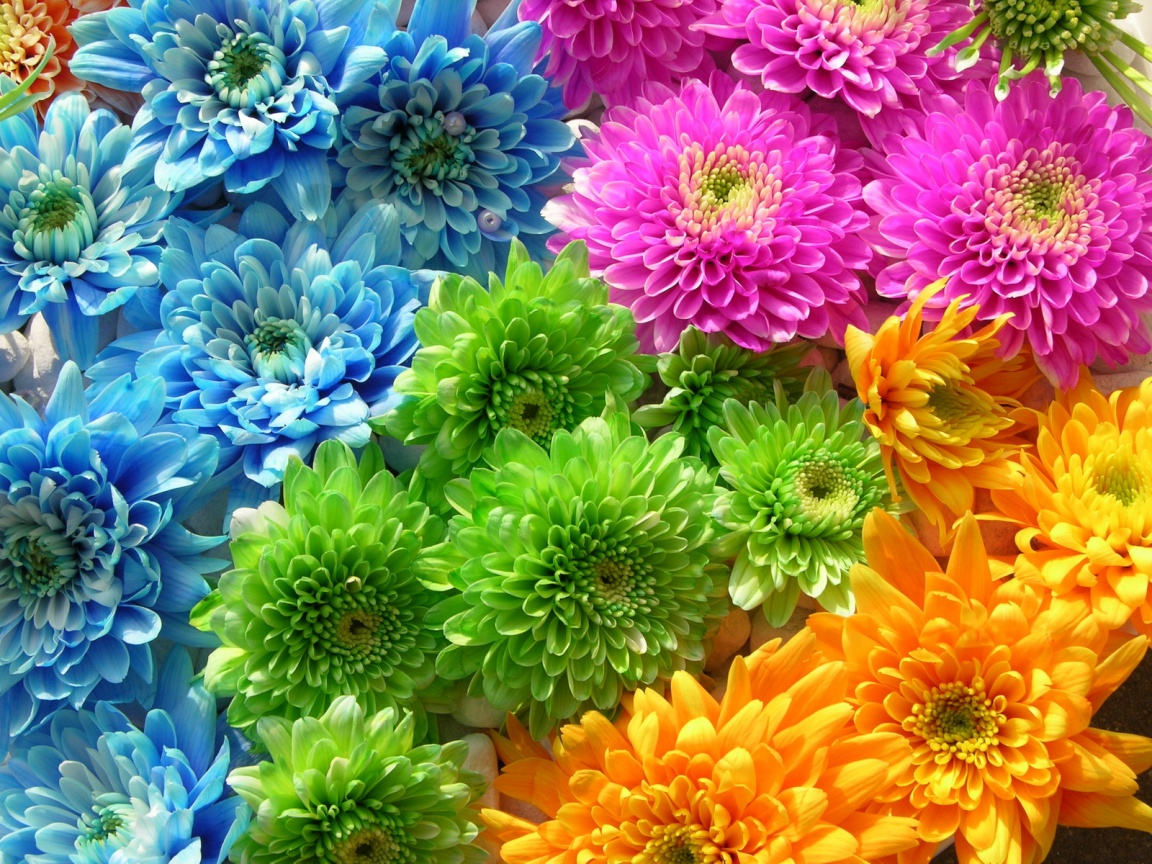 Extreme Colors Flowers