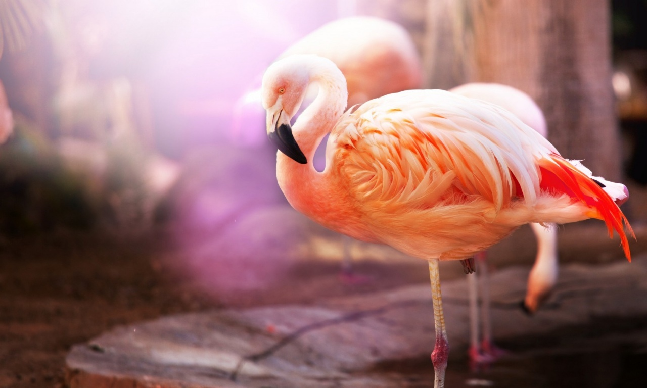 Flamingos Birds Macro
