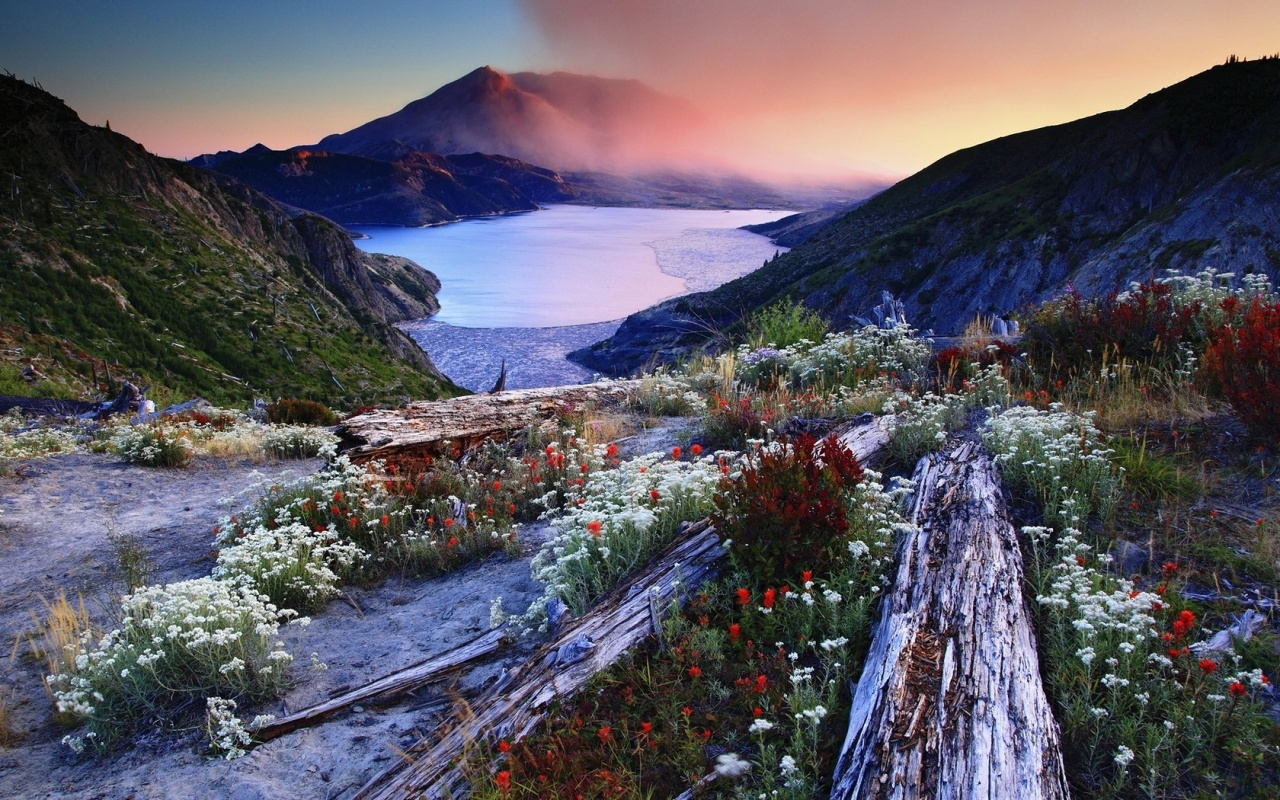 Flowers On Landscape Mountains
