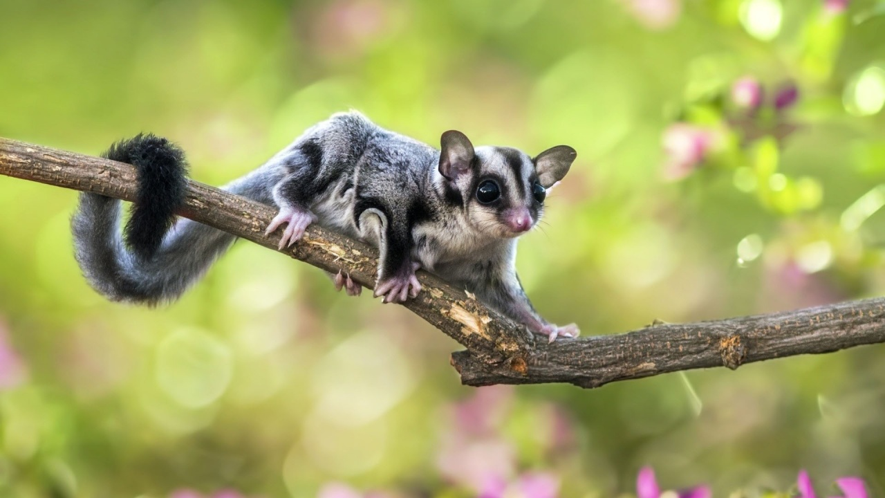 Flying Squirrel On Branch