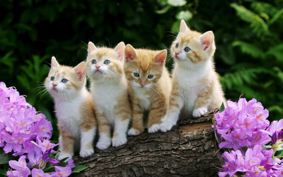 Four Kittens on a Log