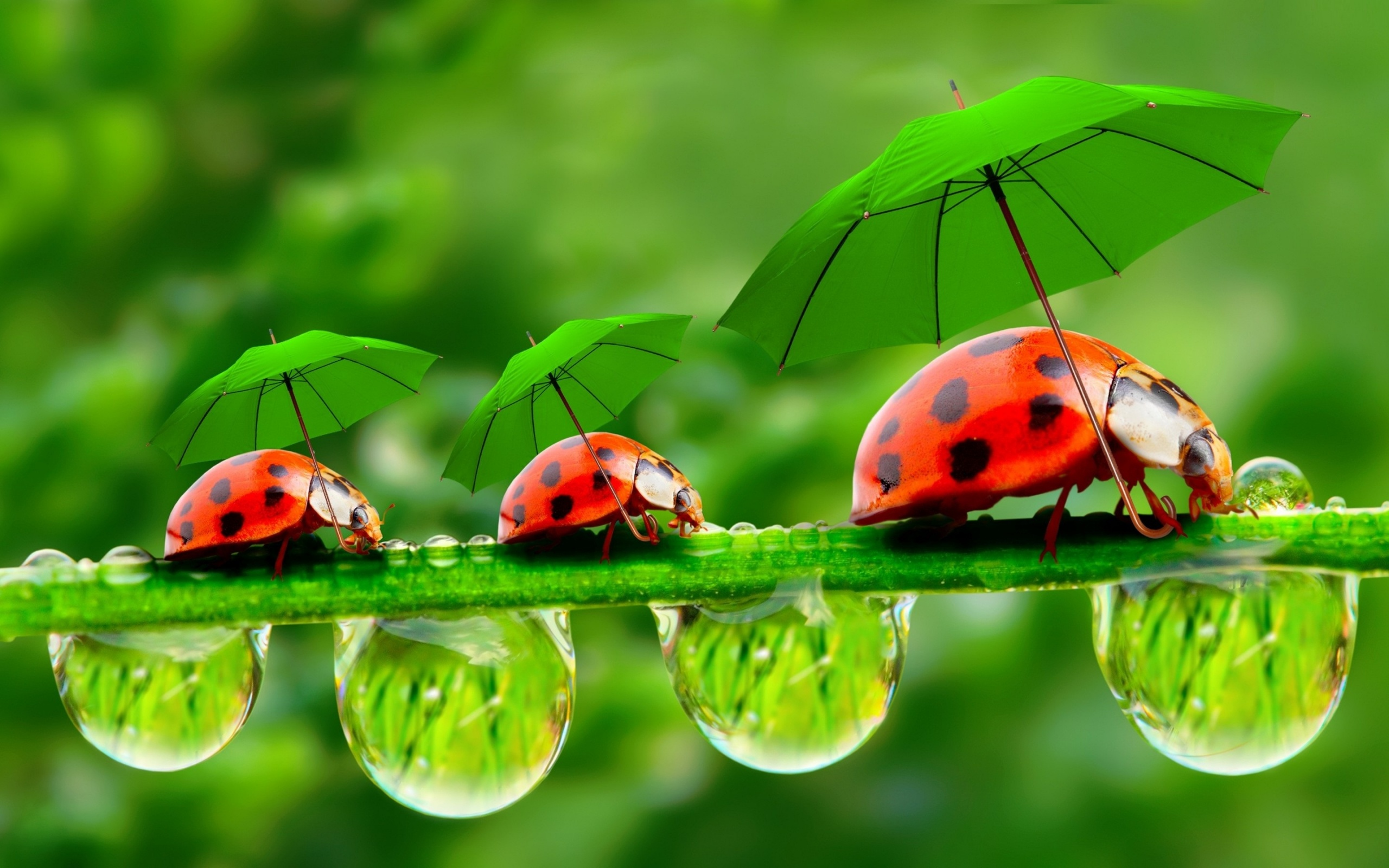 Funny Ladybugs With Umbrellas