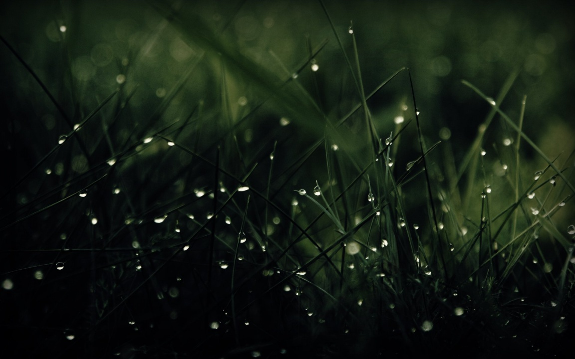Green Grass Dew Drops