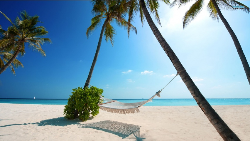 Hammock and Palms on a Beach
