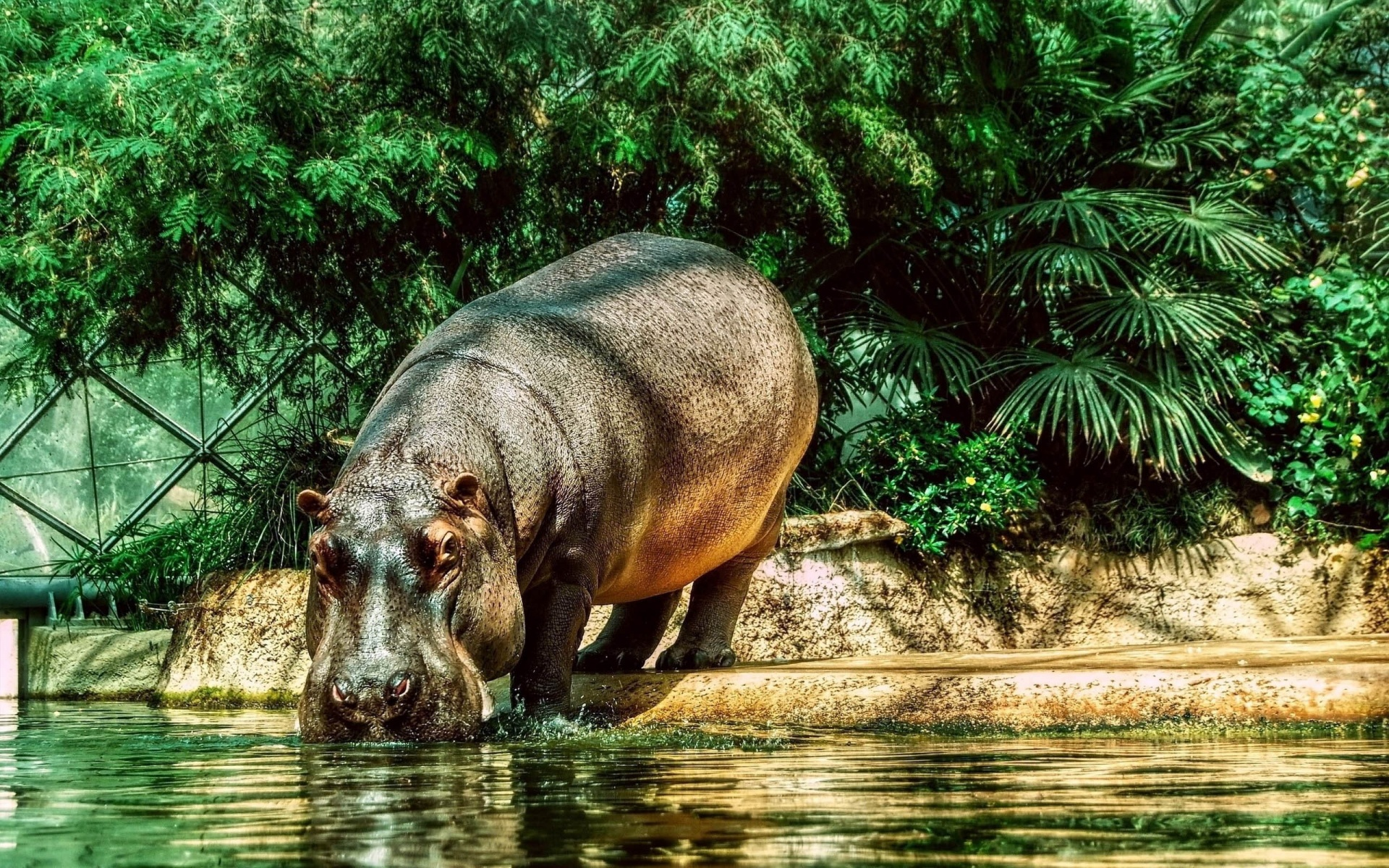 Hippo Drink Water