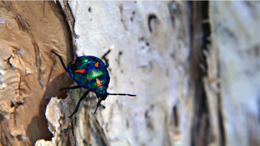 Little Colorful Beetles