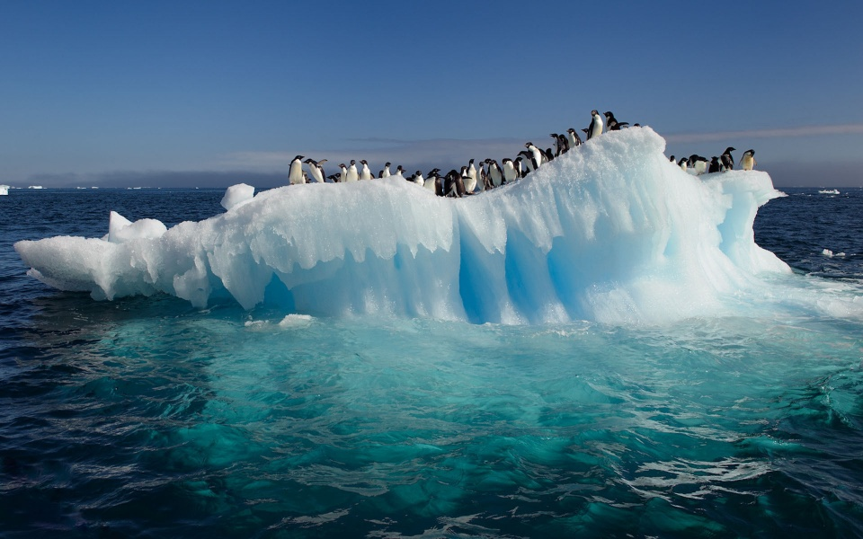 Lots of Penguins on Iceberg