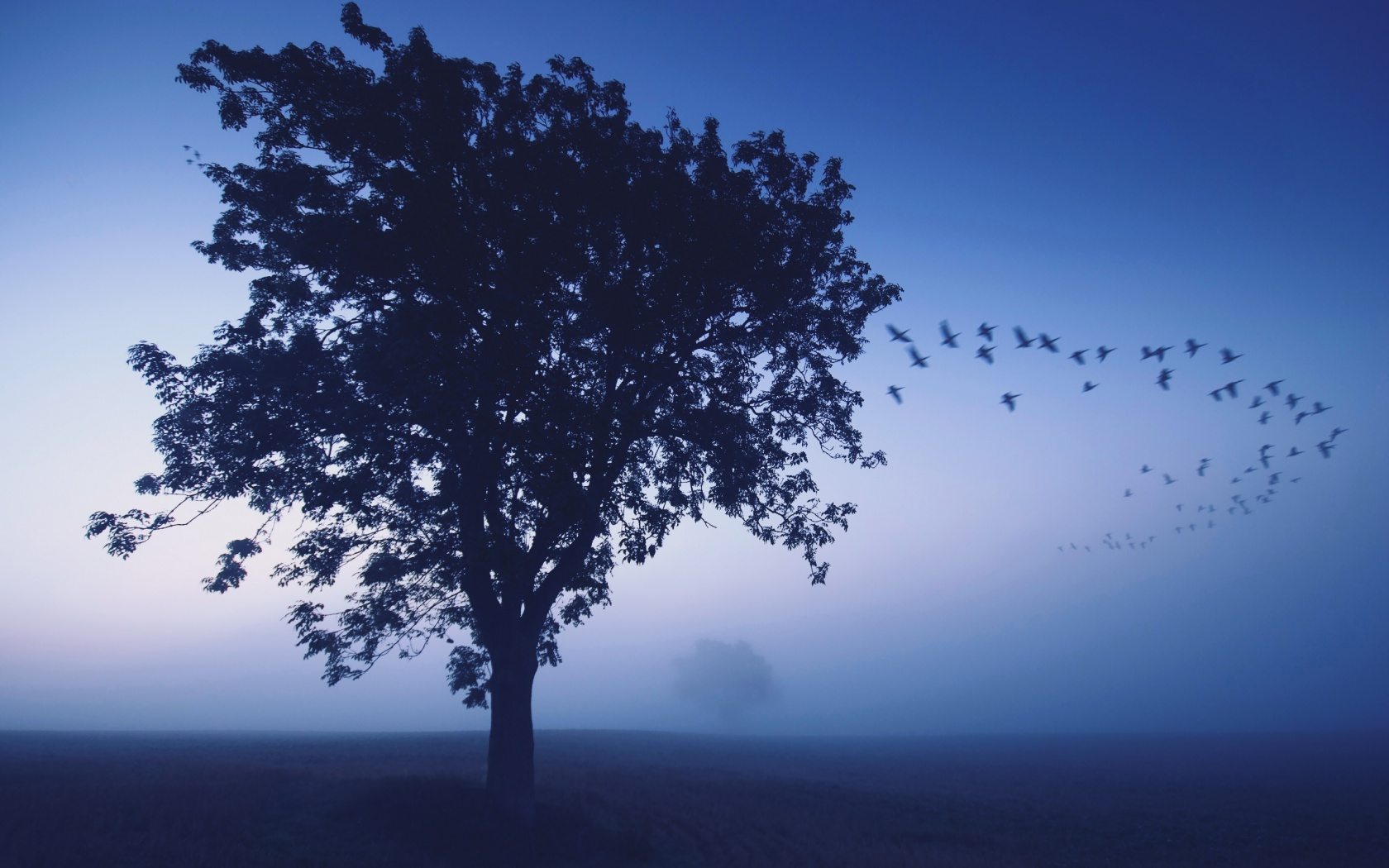 Misty Morning With Flying Bird