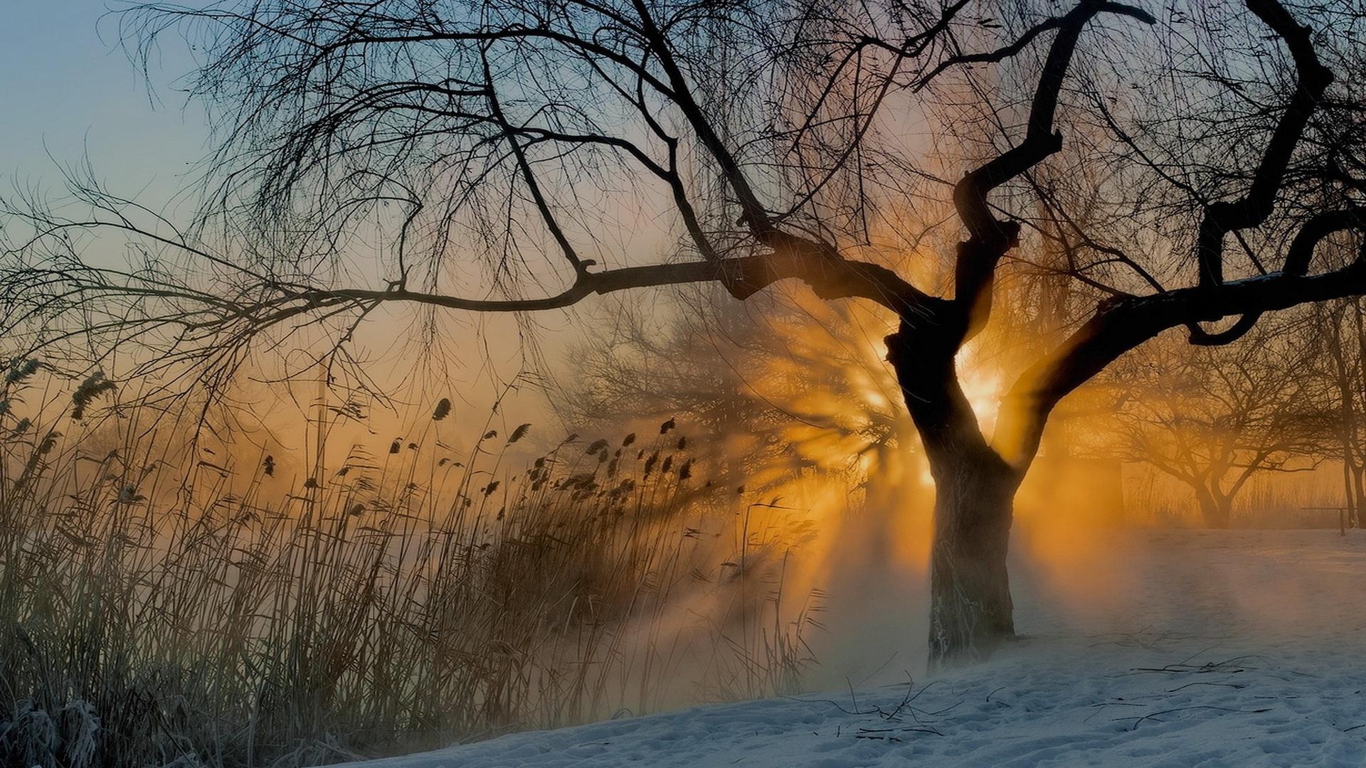 sun fog sunrise trees - photo #24
