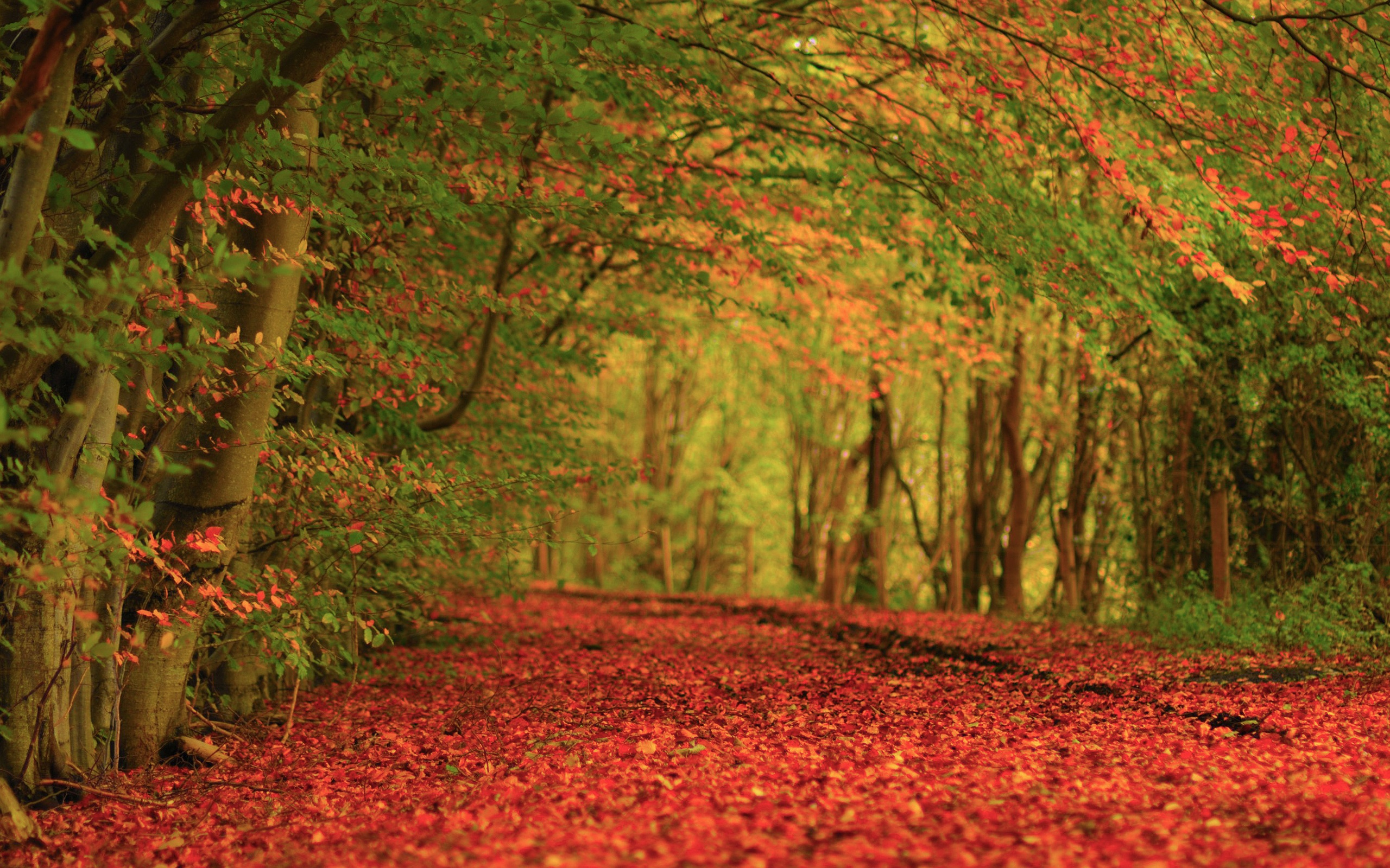 Nature Autumn Foliage Carpet