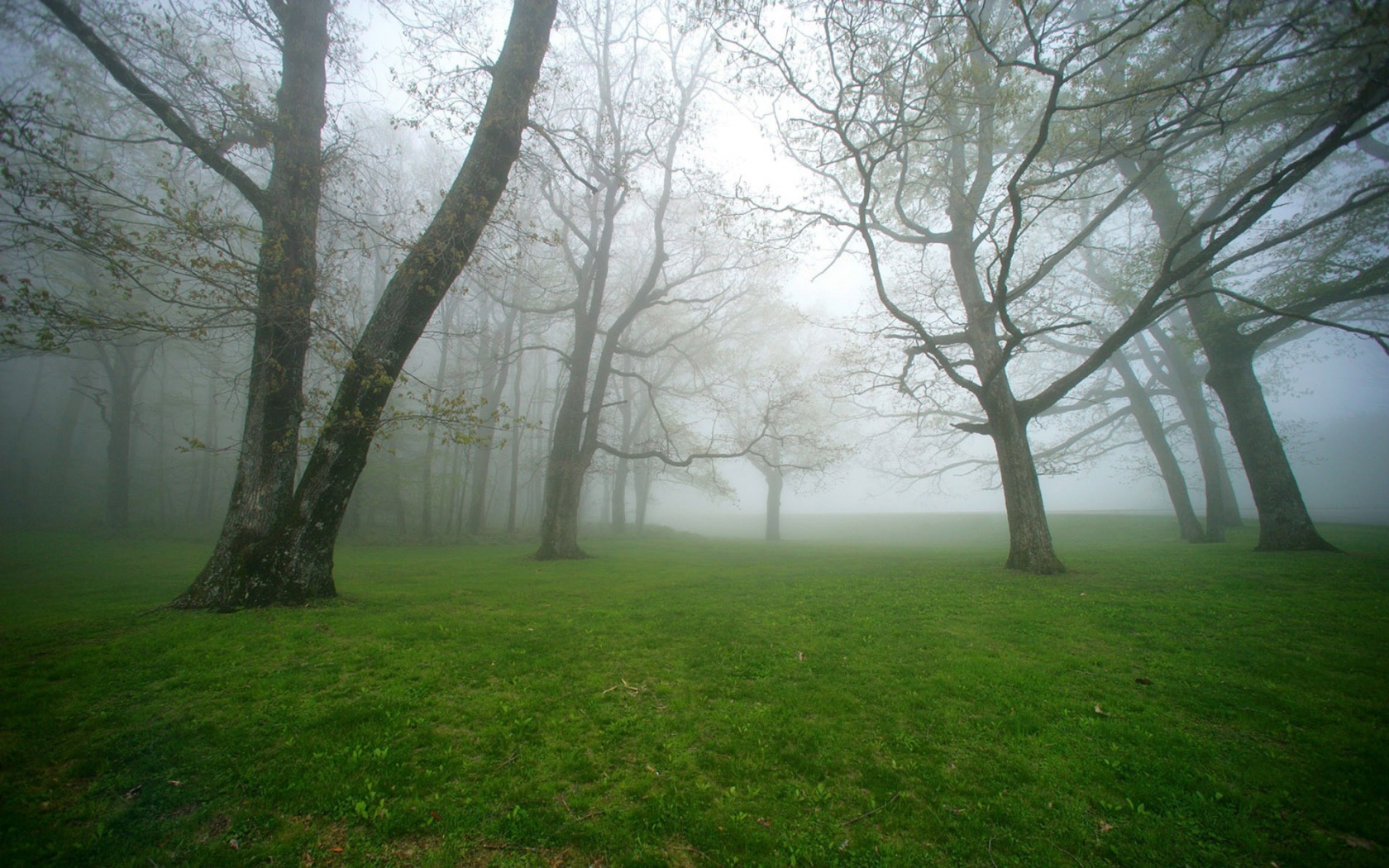 Nature Green Foggy Forest