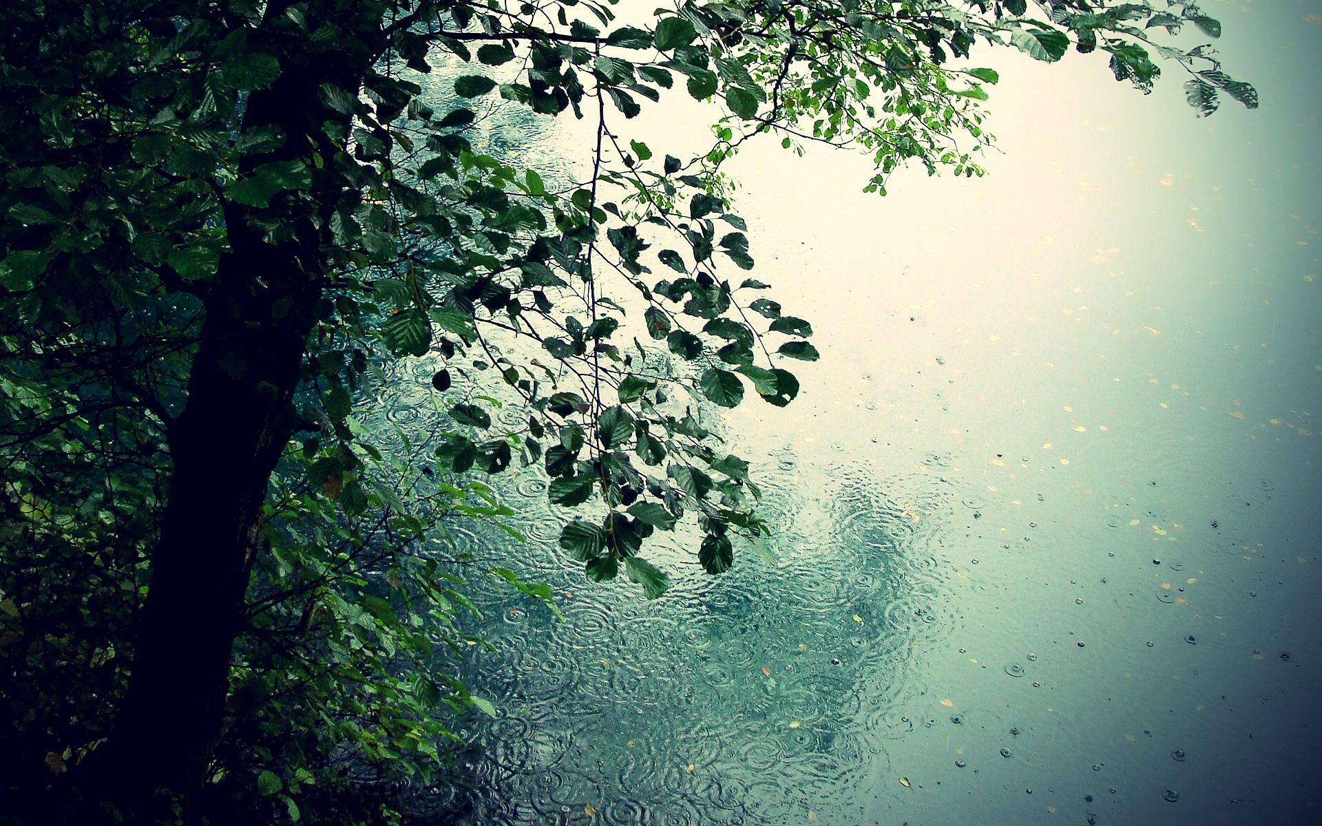 Nature Rain Wallpaper 754757