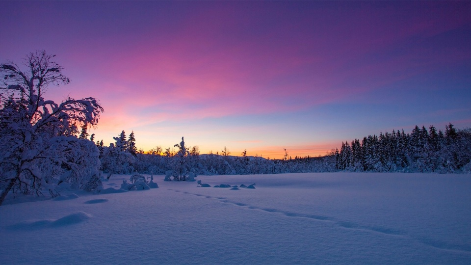 Norway Winter Snow Sunset Trees