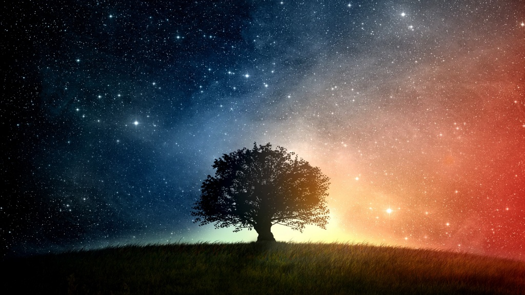 Oak Tree And Starry Night
