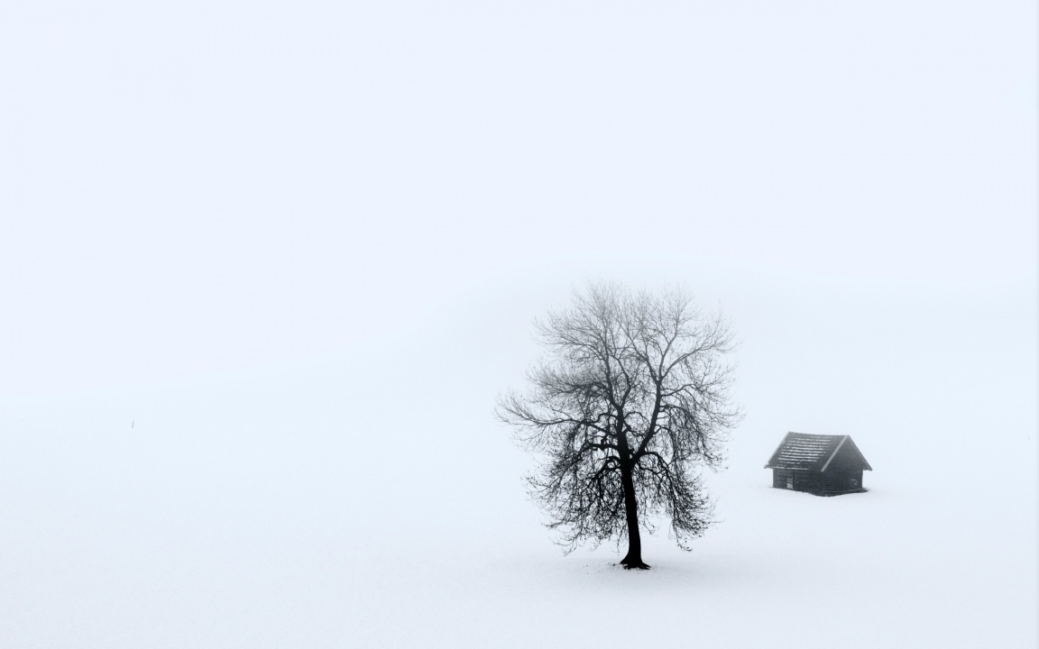 One House And One Tree