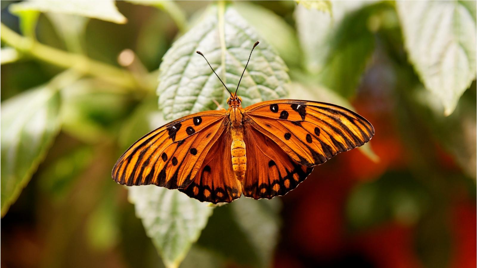 Aninimal Book: Orange Butterfly Wallpaper
