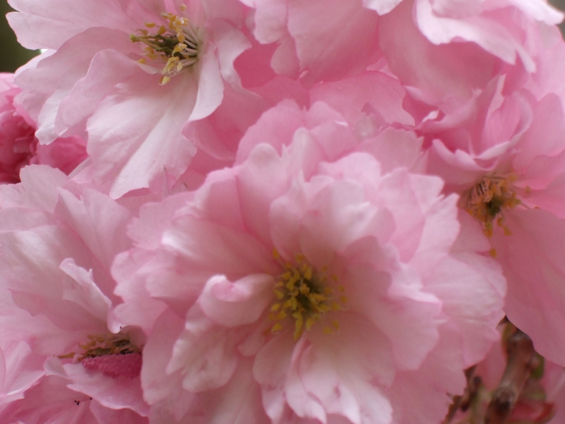 pink spring flowers - photo #12