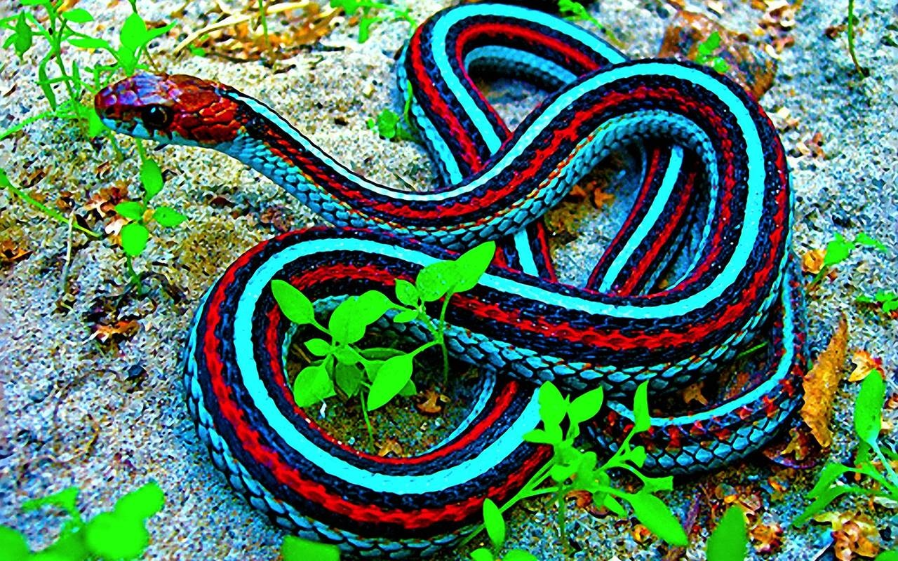 Red And Blue Snake Wallpapers And Pictures