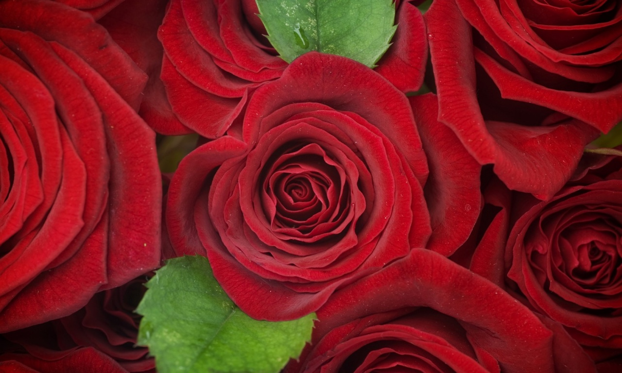 Red Roses Flowers Background