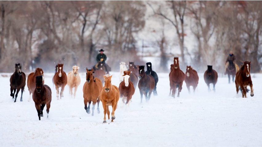 Running Horses At Snow Wallpapers