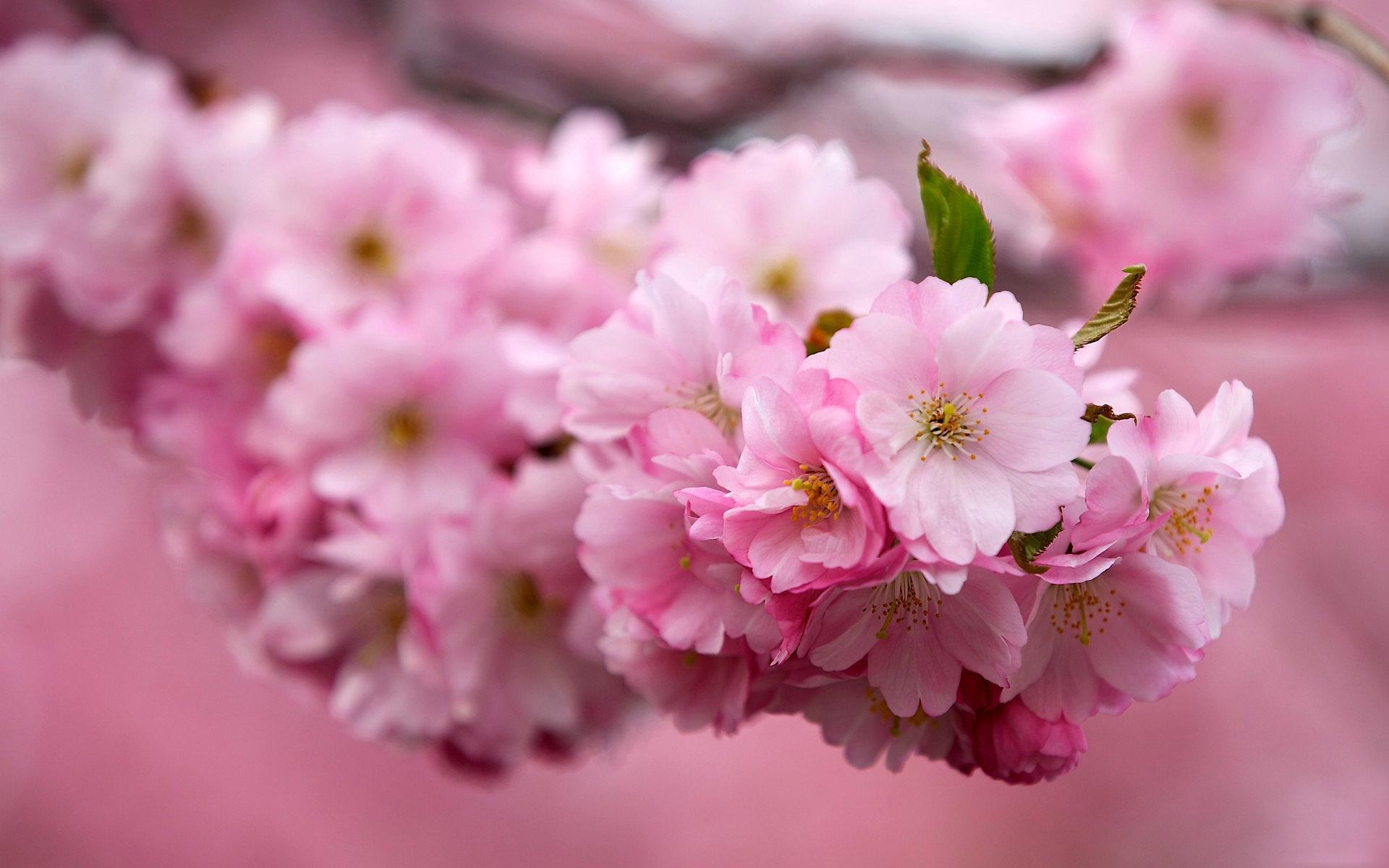 Цветок цветение фото