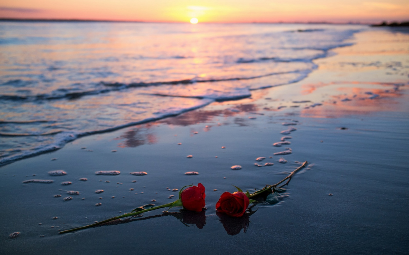 Sea Sunset Roses
