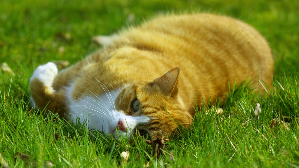 Sleeping Cat On A Green Grass