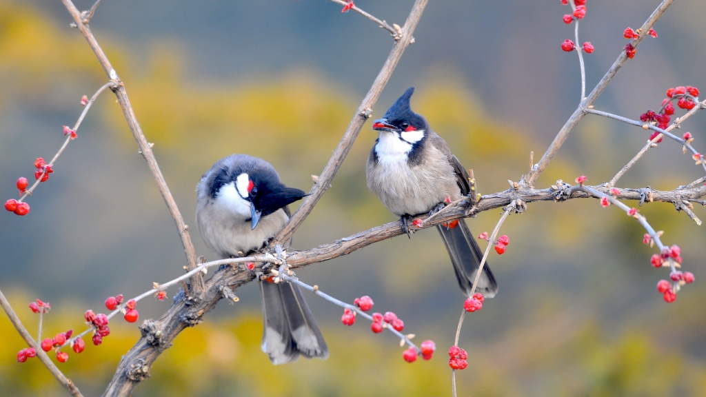Small Birds On Tree Branch