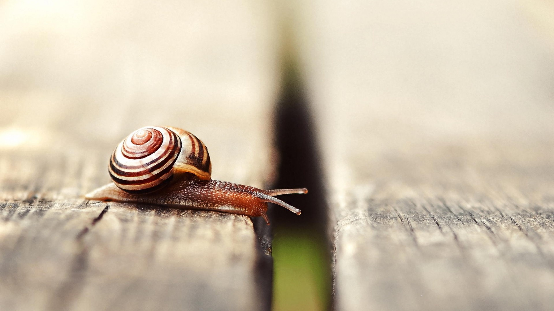 Snail Movement On Boards