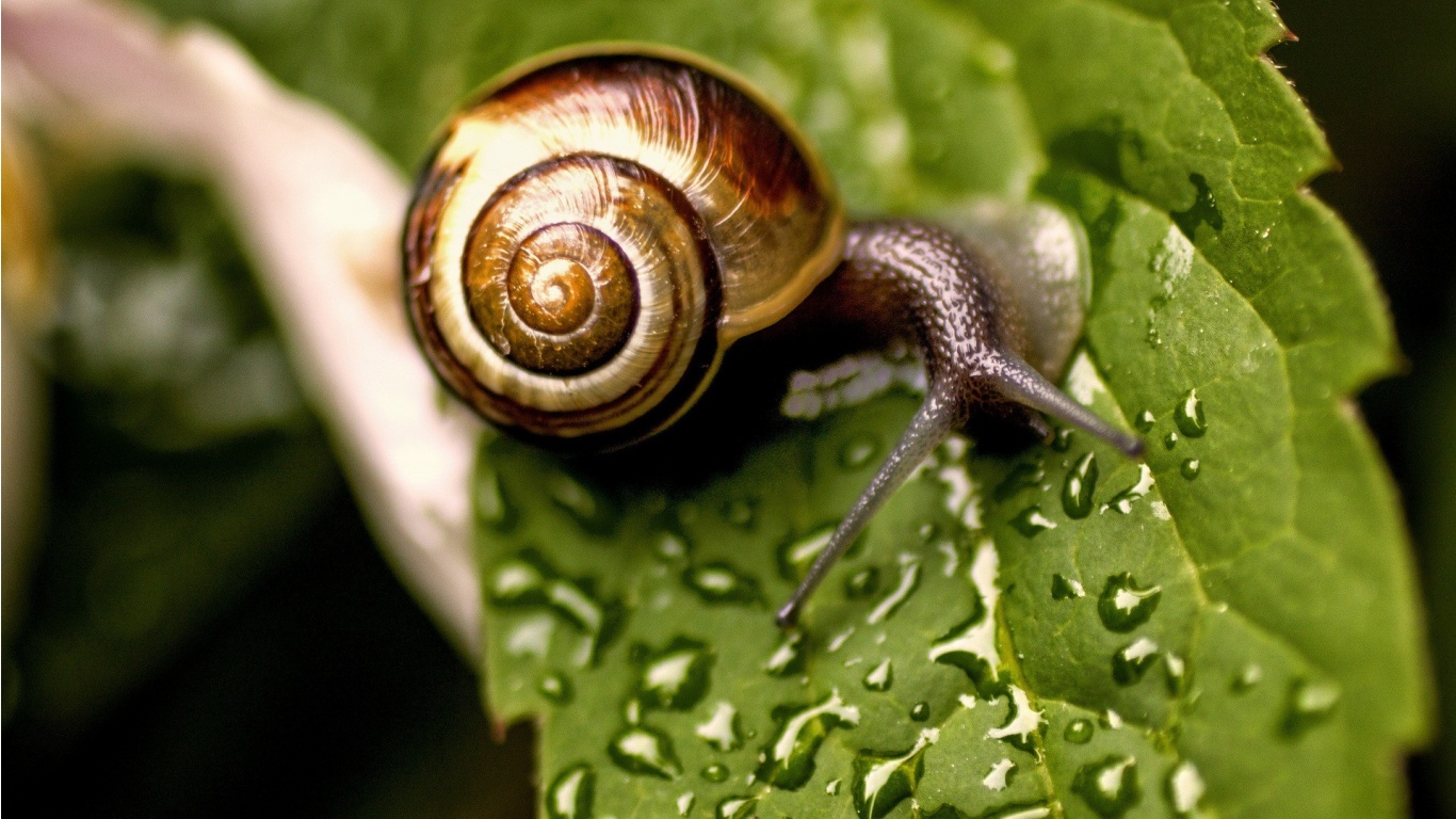 Snail on Wet Leaf