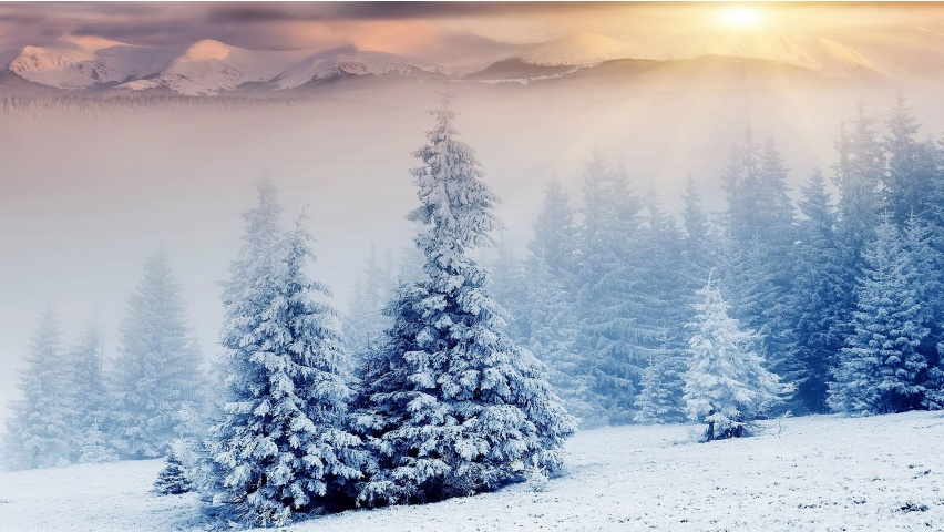 Snowy Mountain Trees