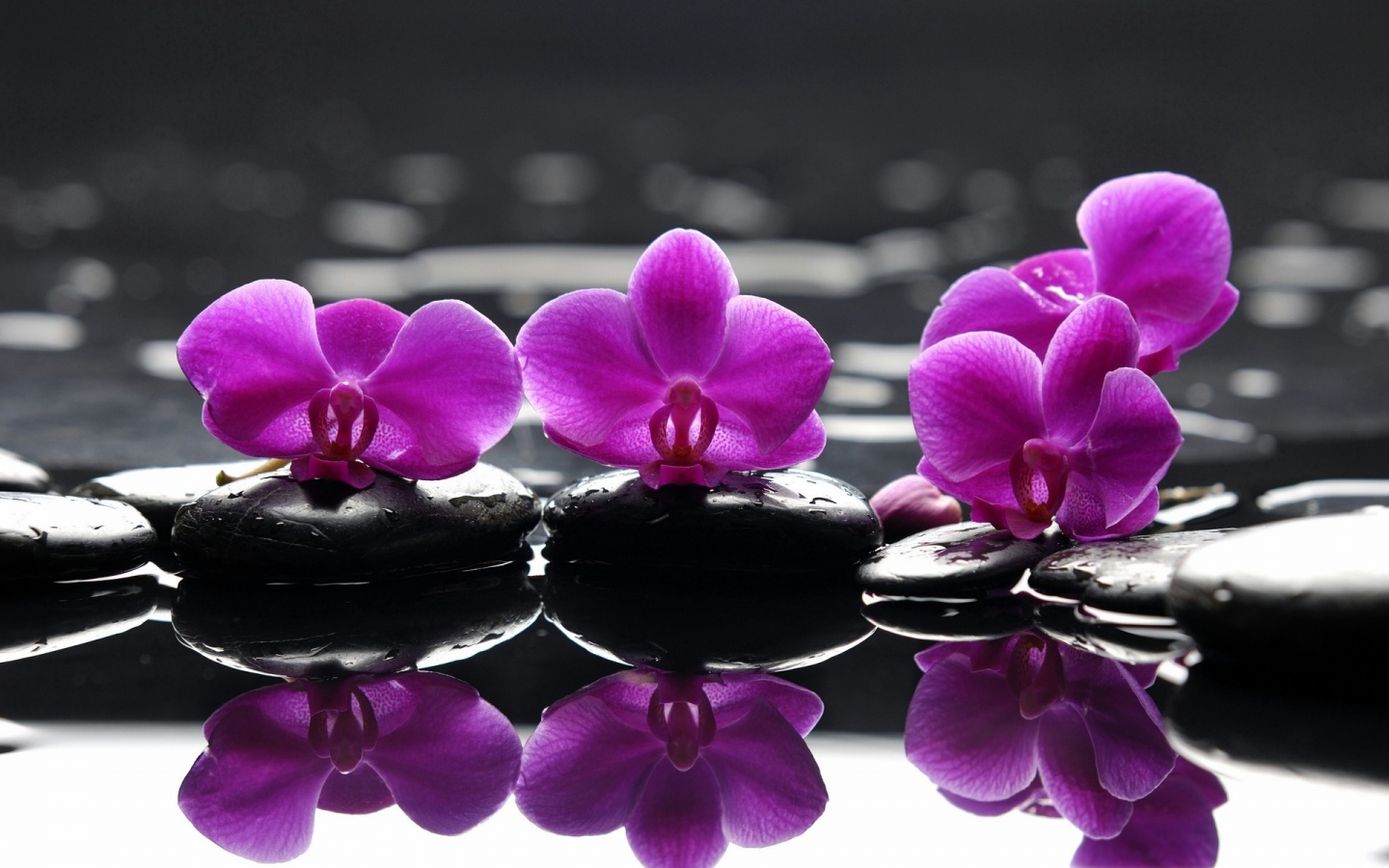 Spa Stones Purple Flower Droplets Reflection