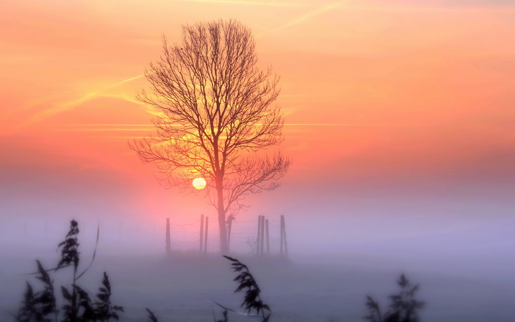 Sunset And Mist