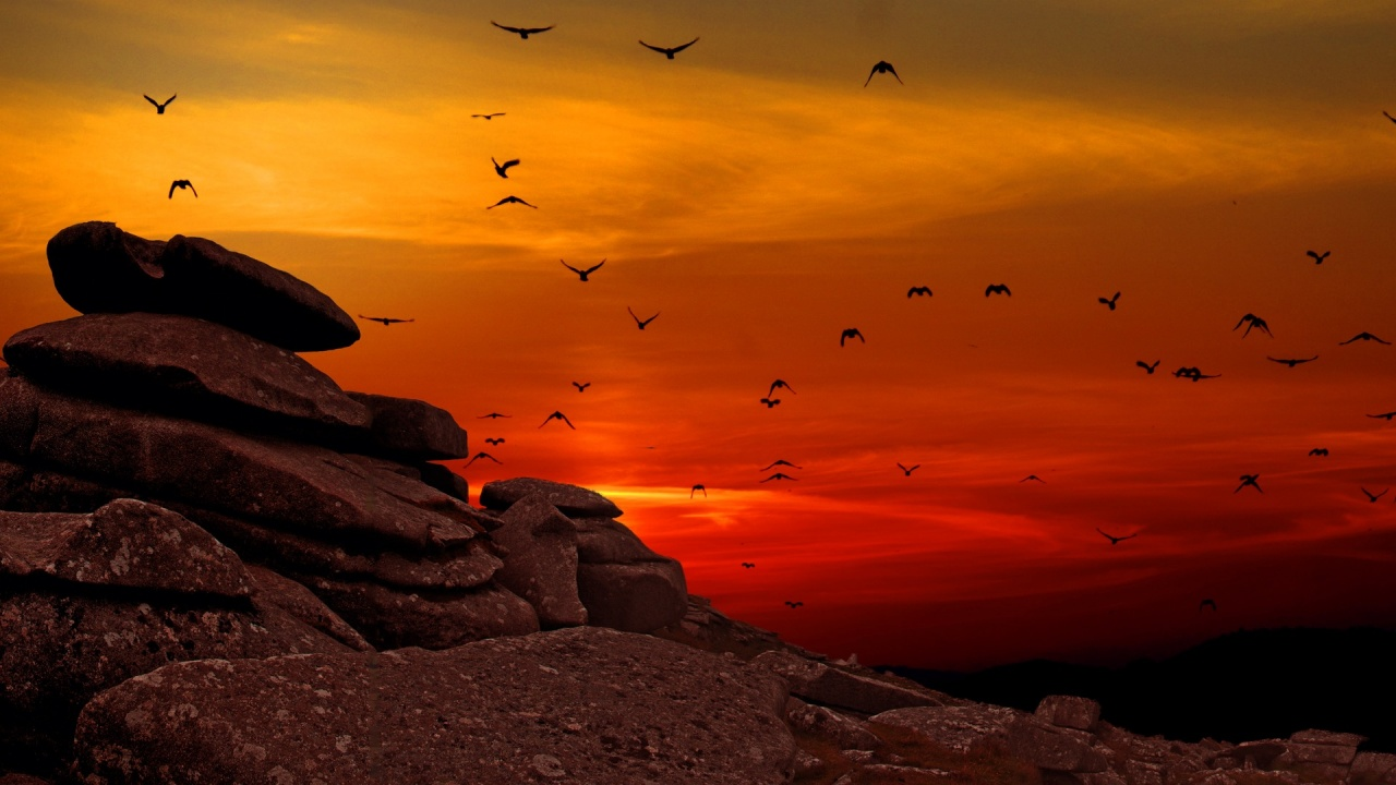 Sunset Flying Birds