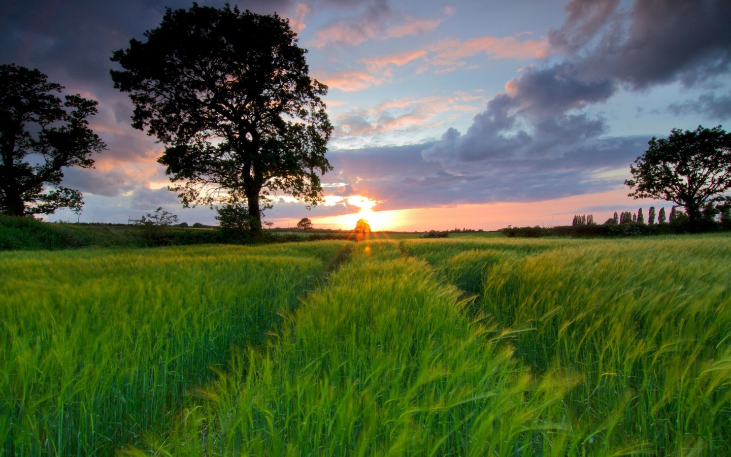 Sunset Over A Grass Field