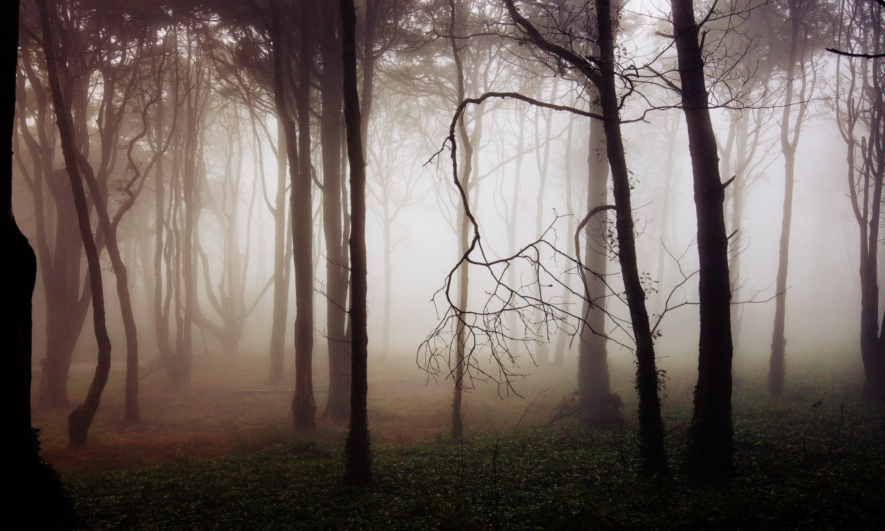 Thick Forest Fog