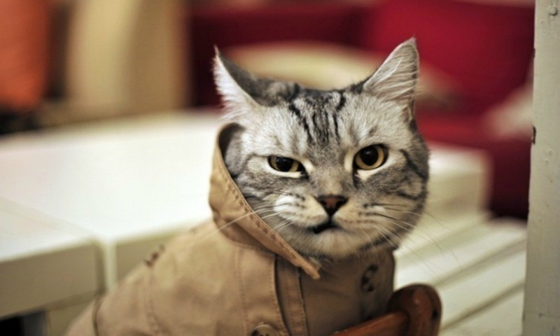 Trenchcoat Cat