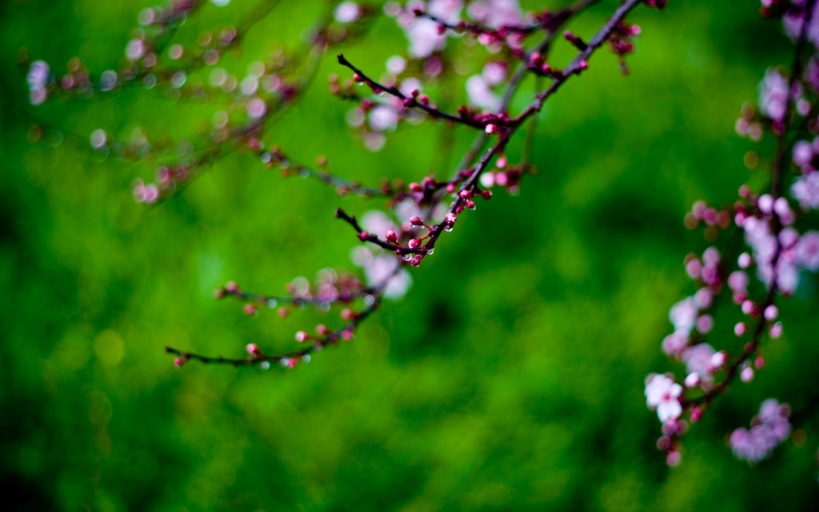 Twigs Flowers Spring Nature Wallpapers
