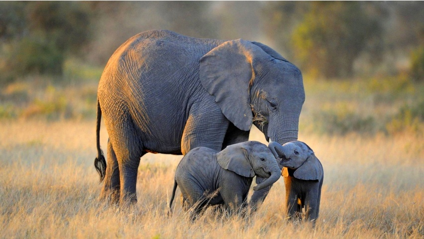 Twin Baby Elephants