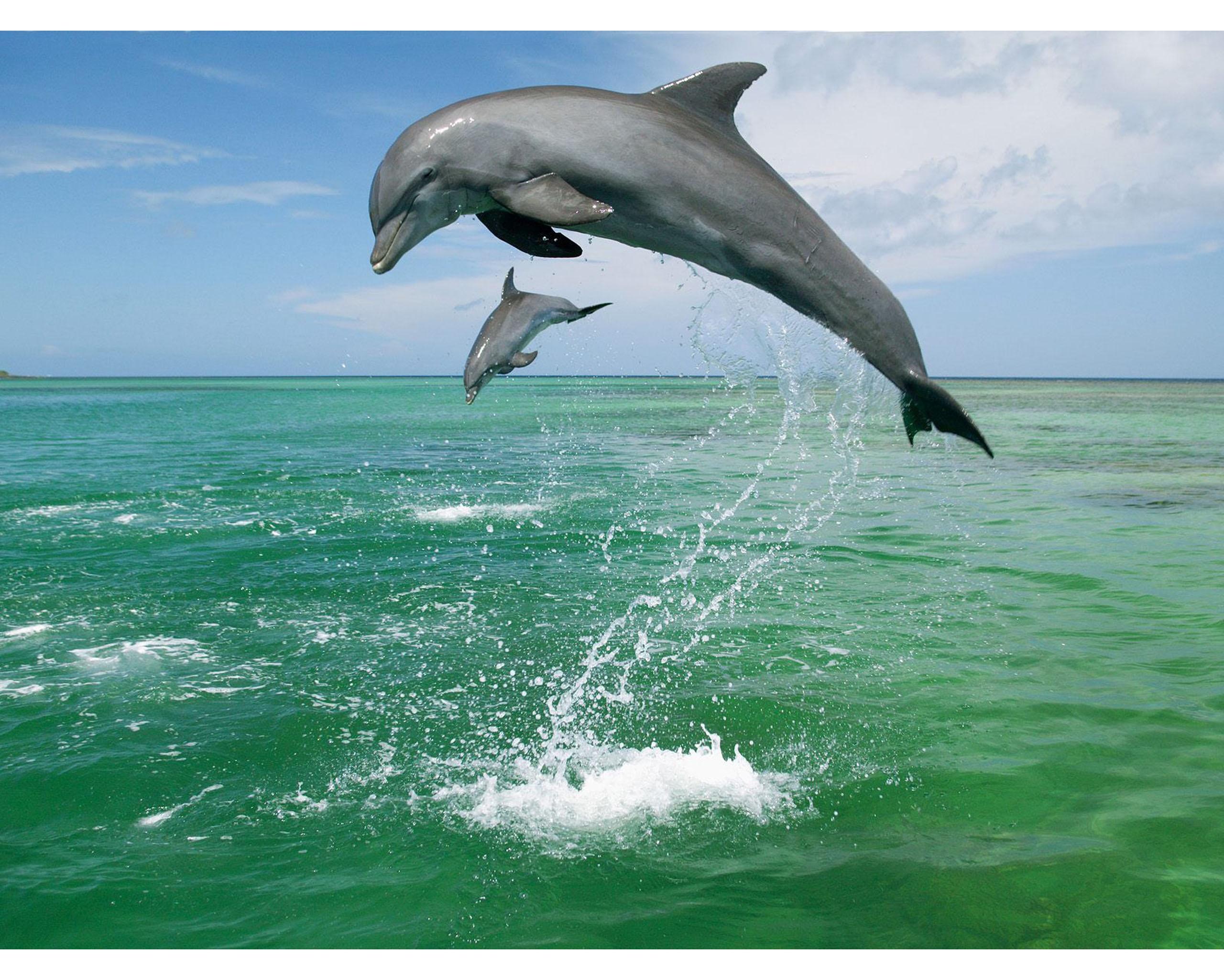 Заставка На Рабочий Стол Дельфины