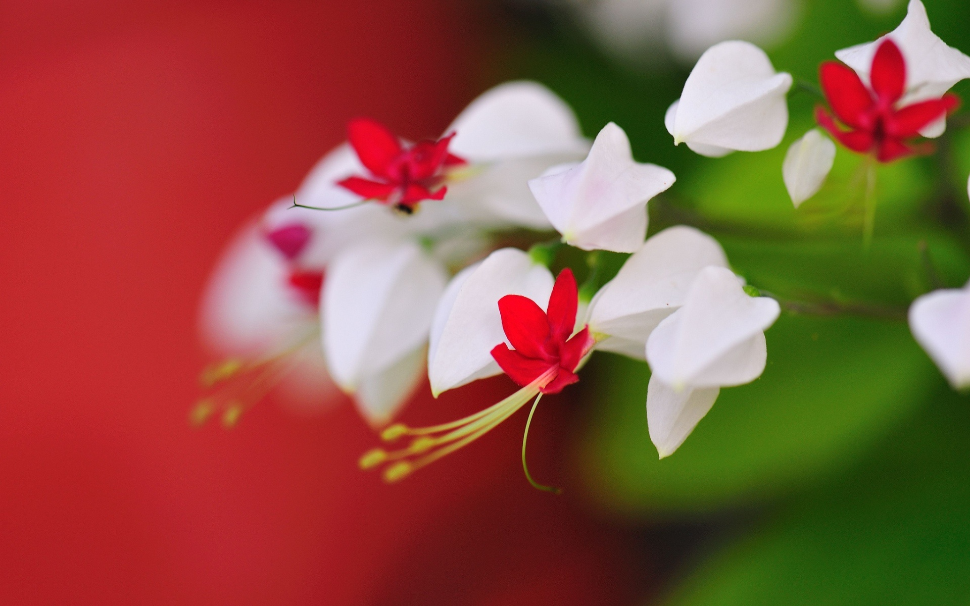pics photos cute flowers