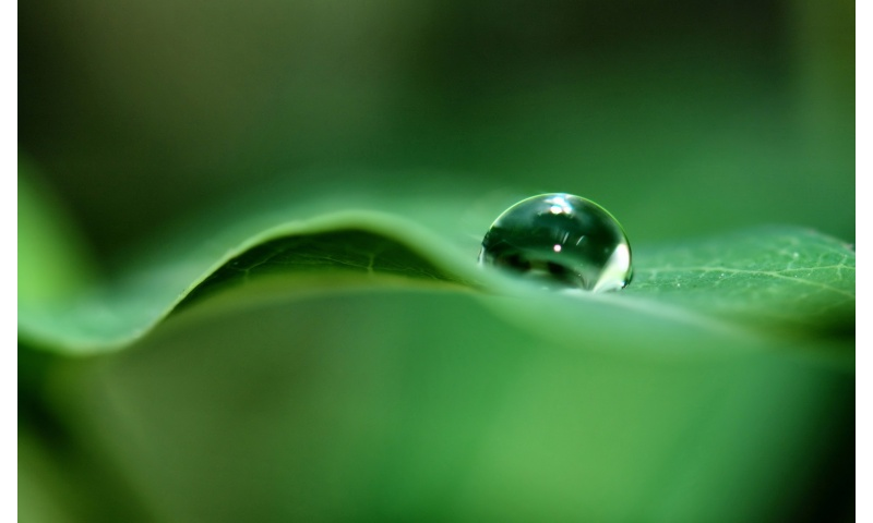 water drop on leef