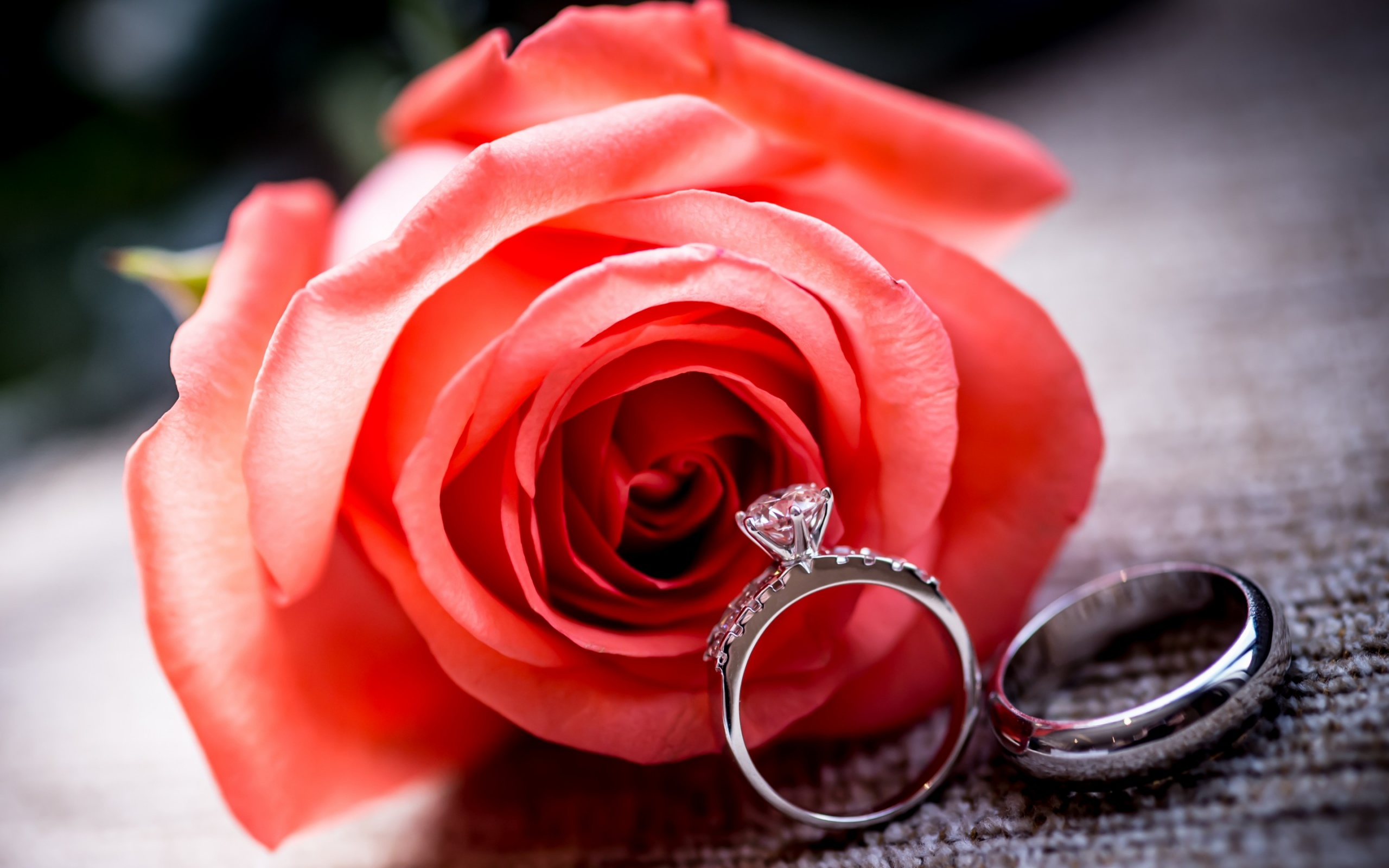 Wedding Rings And Rose Flower