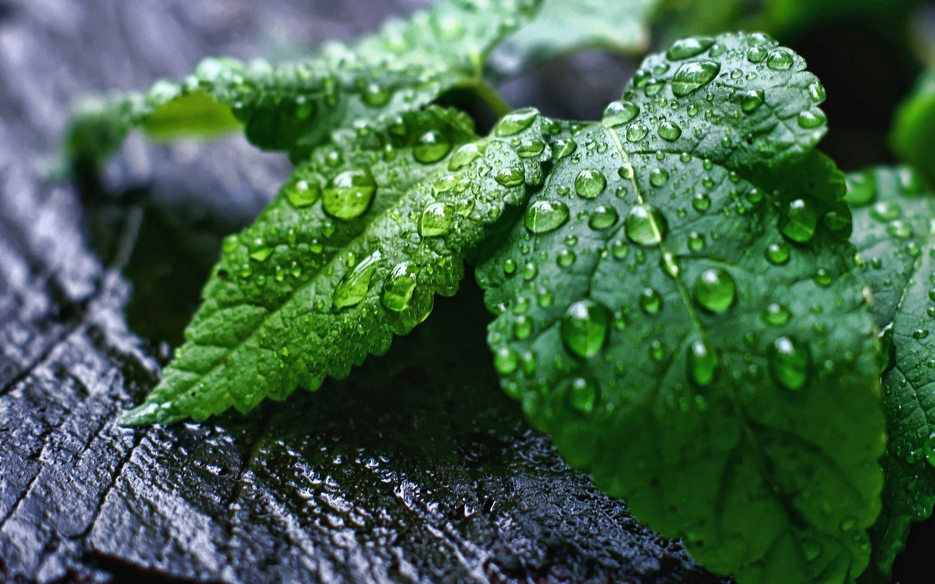 wet leaves wallpaper -#main
