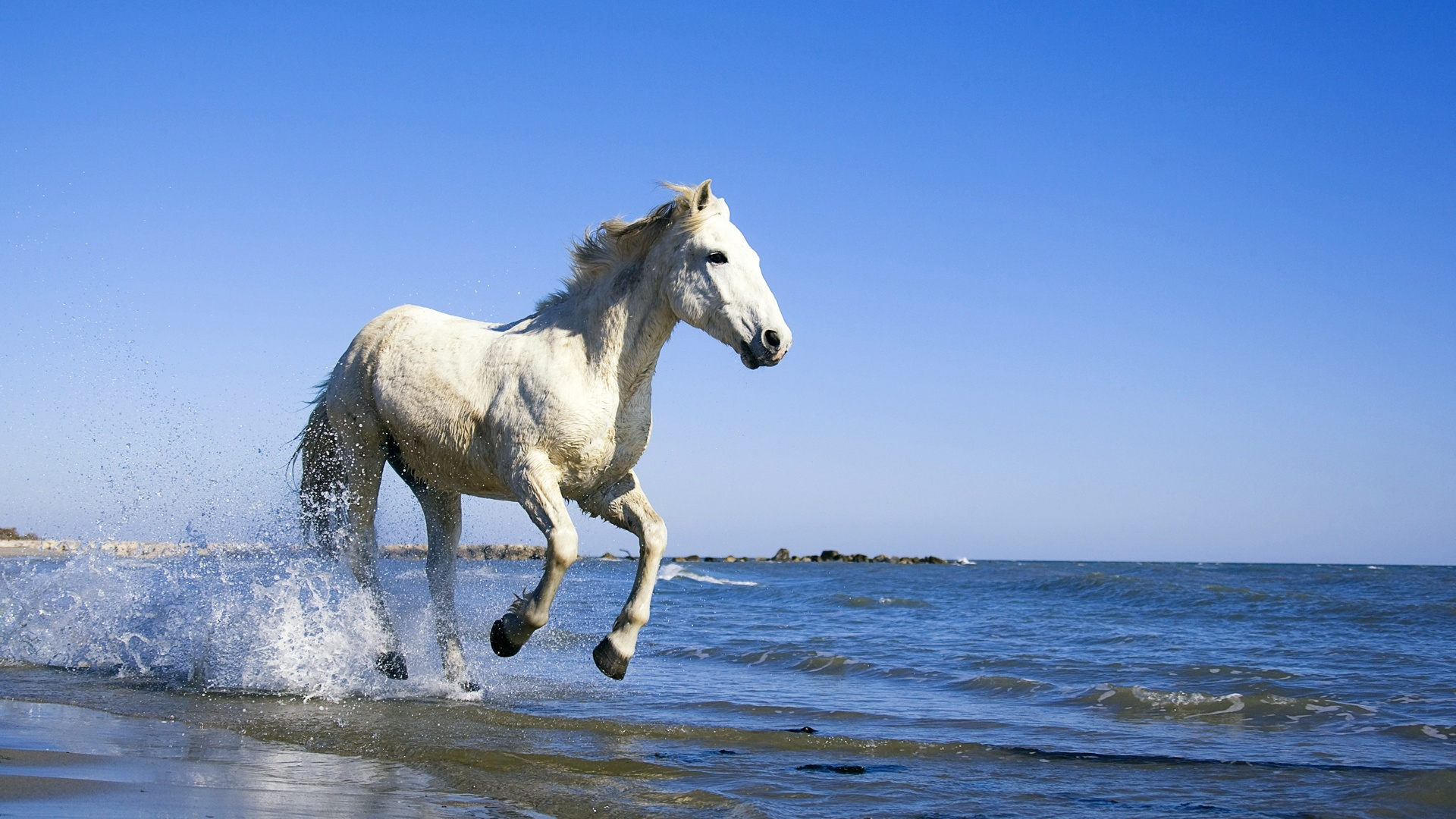 White running horses - photo#27