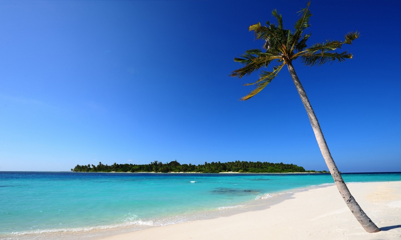 White Sand Beach And Palm