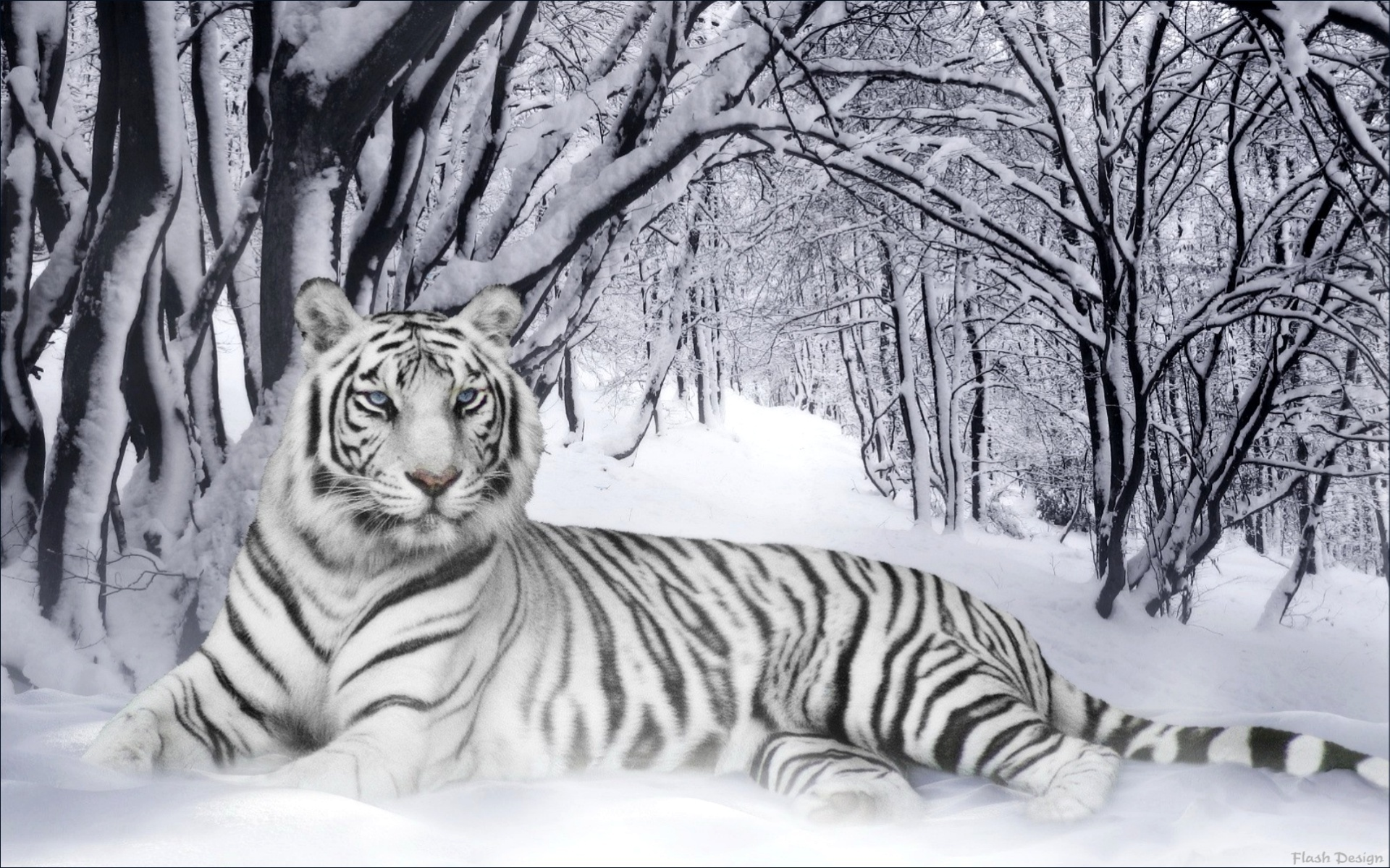 white tiger wallpapers 1920x1200 873007