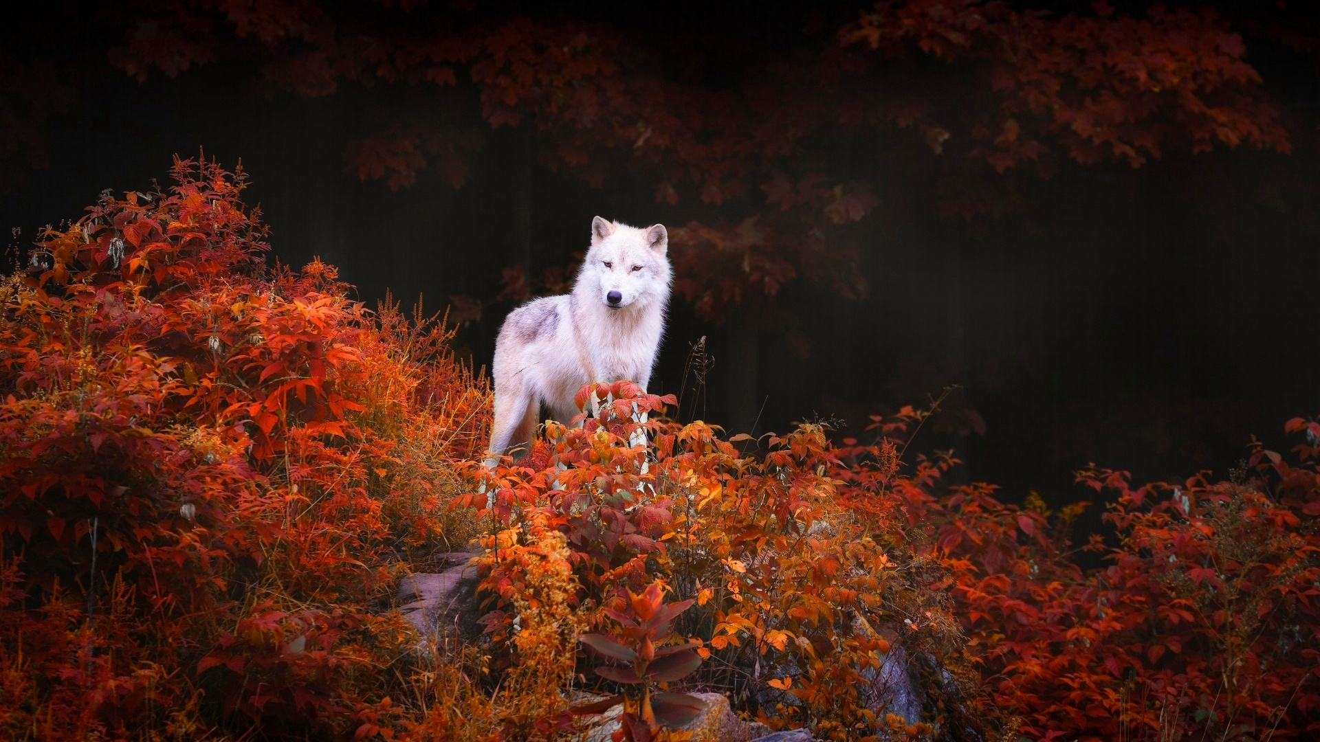 Wolf On Foliage Trees